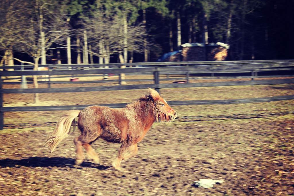 Bil sem majhen poni